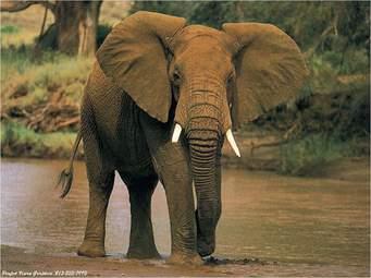 Cette image a un attribut alt vide; le nom du fichier est elephant.jpg